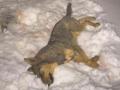 В Сумах мужчину арестовали на полгода за убийство собаки