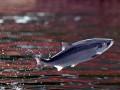 Большинство видов рыб исчезнут до 2048 года - ученые
