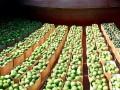 Стало известно, когда в Киев прибудет баржа с арбузами из Херсона
