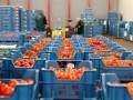 Россия может приравнять украинскую агропродукцию к европейской