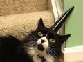 Рог, парик и тапок: Самые странные товары для котов (ФОТО)