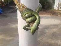 Борьбу геккона и змеи в Таиланде сняли на видео