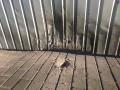 В Сумской области прогремел взрыв возле дома депутата