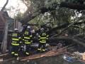 В США на гараж упало огромное дерево, пострадали 19 человек