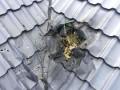 В дом депутата в Ровно бросили гранату