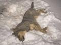В Сумской области расстреляли 20 бродячих собак