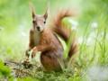 В Киеве объявили сезон тишины, чтобы животные могли размножаться