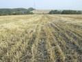 Власти хотят упростить процедуру выделения земельных участков - Ъ