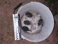Харьковчанин на проспекте нашел на улице ведро с гранатами