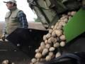 Эксперты угрожают Украине дефицитом картофеля