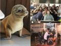 Хорошие новости: застолье морского льва, сон на работе и Зинкевич на Родине
