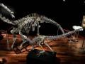 На аукционе продали скелеты динозавров за два миллиона долларов