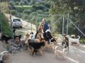 Житель Крита спас 200 псов от голодной смерти