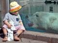 Лора и медведь, тупик против чаек: животные недели (ФОТО)
