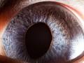 Эти глаза напротив: невероятно четкие фото зрачков животных