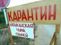 Из-за вспышки чумы на Черниговщине начали закрывать дороги