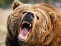 Медведь-людоед растерзал человека на Камчатке