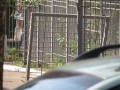 В Мариуполе евробляха во время погони снесла ворота СБУ