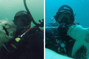 В Сети показали трогательную дружбу дайвера и акулы
