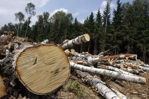 Сегодня - Международный день лесов