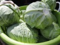 Украинские тюремщики потратили полсотни миллионов гривен на овощи