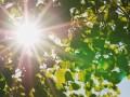 Неделя в Украине начнется 33-градусной жарой