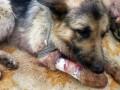 На Донбассе собака спасла двоих военных, прикрыв их собой