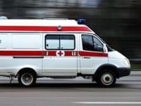 Во Львовской области в больницу попали двое мужчин из-за укуса змей