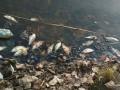 В реке на Житомирщине погибло рыбы на семь млн гривен