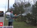 В Запорожье придумали, как помешать незаконной вырубке елок