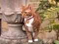 В резиденции Черчилля поселился новый кот