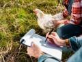 Украинская курятина пользуется большим спросом в мире - аналитики