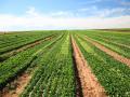 В Украине создадут реестр производителей органической продукции