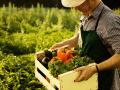 Комитет ВР одобрил новый налог для фермеров