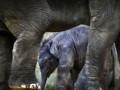 В Казахстане работники зоопарка спасаются от слонов с помощью бронированных ботинок