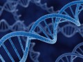 В Украине создадут базу данных ДНК военнослужащих