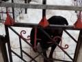 На Харьковщине казнили пса, который загрыз ребенка