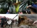 День в фото: Гигантский цветок, огромная бас-гитара и маленький кенгуру