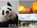 День в фото: Панда с детенышем, пожар в Ираке и наводнение в Германии