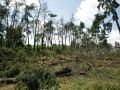Кличко поручил расследовать вырубку деревьев в Дарнице