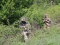 В Луганской области обнаружено тело пропавшего сапера
