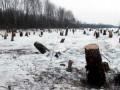 В Украине высадили на 5% больше лесов, чем срубили
