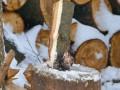 Под Львовом упавшее дерево убило 18-летнего парня