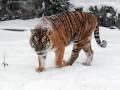 Пушистые и снежные: Киевский зоопарк показал, как проходит зима у его питомцев