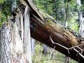 В Киеве погиб мужчина от упавшего на него дерева