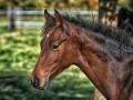 В Днепропетровской области 200 лошадей могут умереть из-за голода
