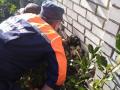 В Николаеве щенка хаски спасали из кирпичной ловушки
