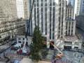 В Нью-Йорке установили главную рождественскую ель
