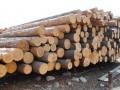 Стали известны причины отмены запрета на экспорт леса