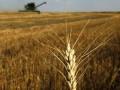 Под Киевом чиновники раздают землю под видом пастбищ и сенокосов - источник